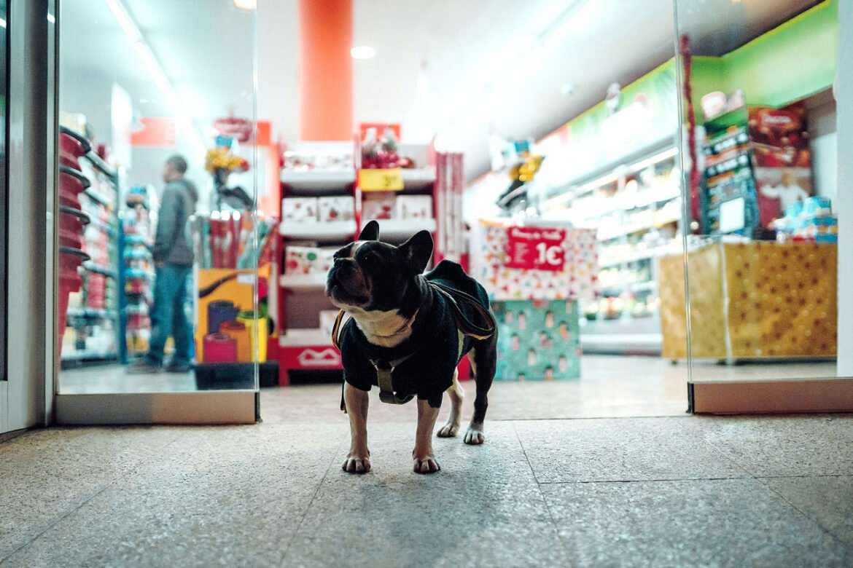 cachorro em frente a loja